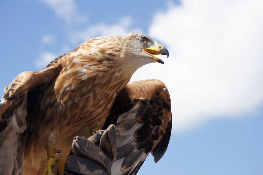 drones-golden-eagle